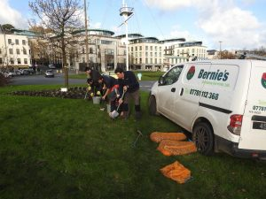 Bernie's Grdening Services team volunteering to plant 35,000 Crocus Corms
