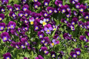 summer flowers 5 Tips For Garden Maintenance