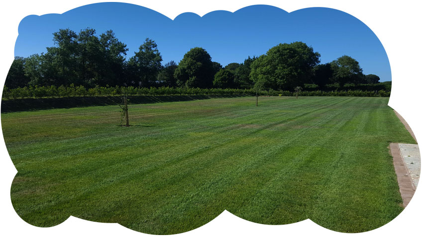 beautifully cut lawn as part of our garden maintenance package.