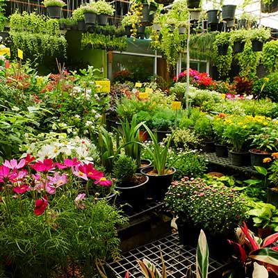 Bernie's Gardening Services range of plants and flowers we supply.