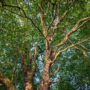 Unpruned trees can cause a variety of problems.